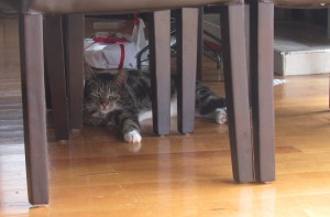 He still likes sitting under the table